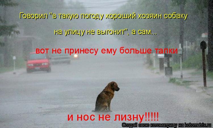 """Котоматрица: Говорил """"в такую погоду хороший хозяин собаку на улицу не выгонит"""", а сам... вот не принесу ему больше тапки и нос не лизну!!!!!"""