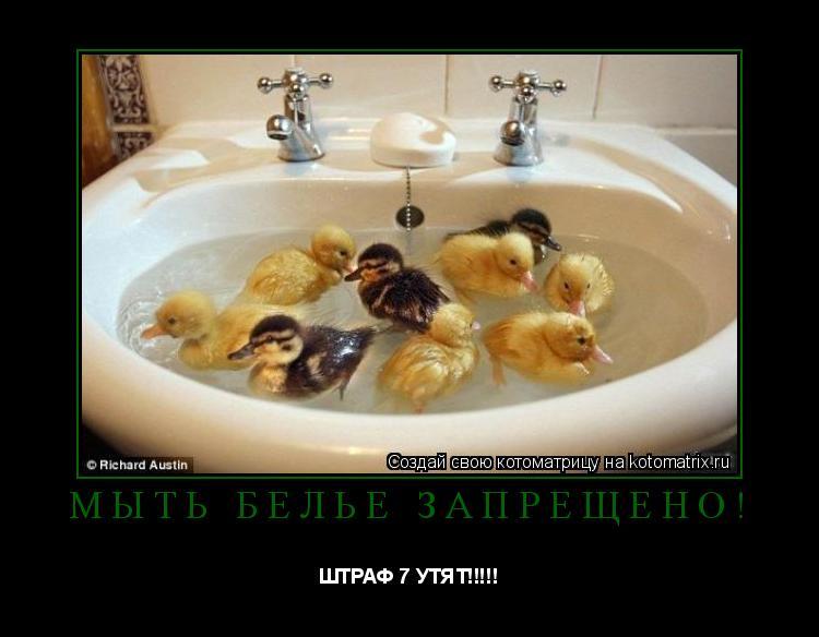 Котоматрица: Мыть бельё запрещено! ШТРАФ 7 УТЯТ!!!!!