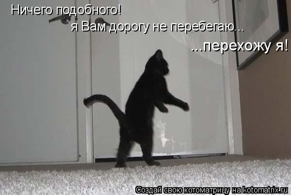 Котоматрица: Ничего подобного! я Вам дорогу не перебегаю... ...перехожу я!