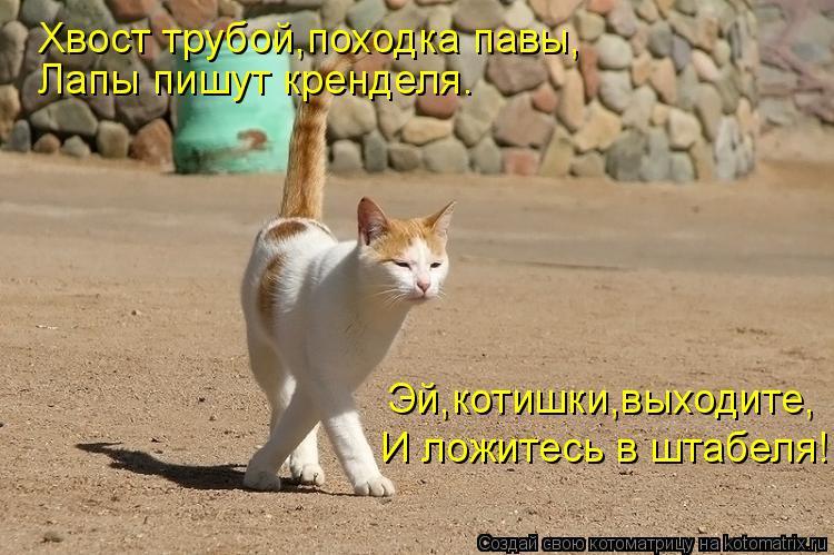 Котоматрица: Хвост трубой,походка павы, Лапы пишут кренделя. Эй,котишки,выходите, И ложитесь в штабеля!