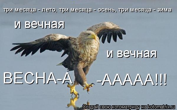 Котоматрица: три месяца - лето, три месяца - осень, три месяца - зима и вечная и вечная ВЕСНА-А -ААААА!!!
