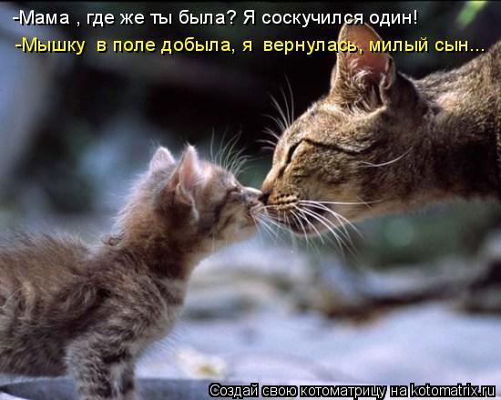 Котоматрица: -Мама , где же ты была? Я соскучился один!  -Мышку  в поле добыла, я  вернулась, милый сын...