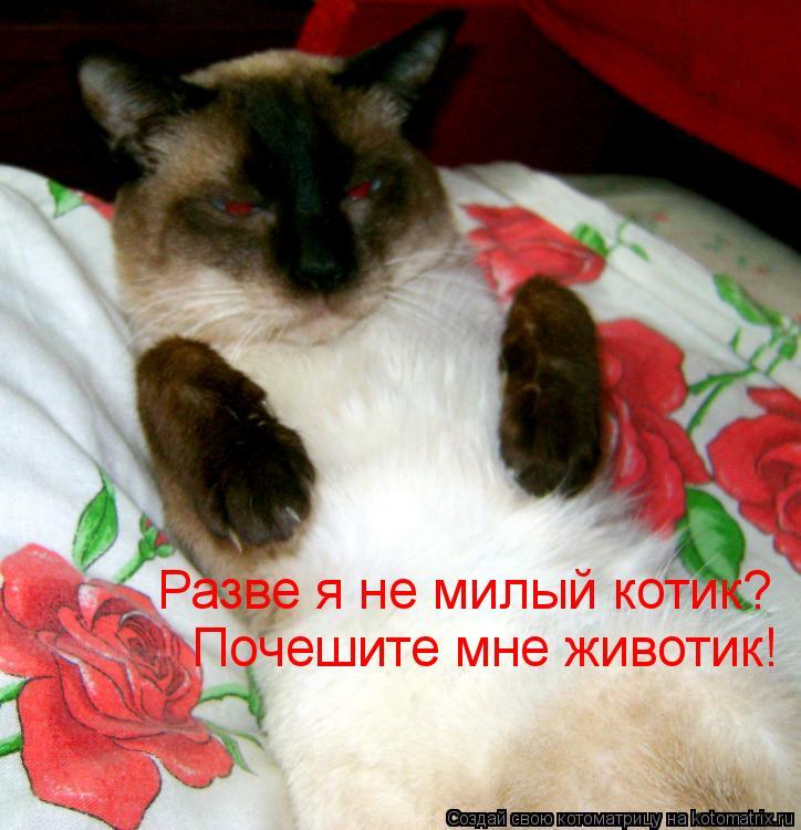 Котоматрица: Разве я не милый котик? Почешите мне животик!