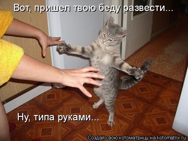 Котоматрица - Вот, пришел твою беду развести... Ну, типа руками...