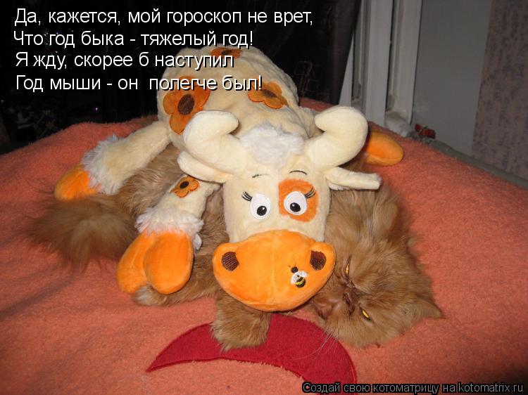 Котоматрица: Да, кажется, мой гороскоп не врет, Что год быка - тяжелый год! Год мыши - он  полегче был!  Я жду, скорее б наступил