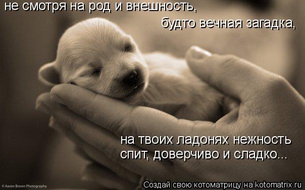 Котоматрица: на твоих ладонях нежность спит, доверчиво и сладко... не смотря на род и внешность, будто вечная загадка,