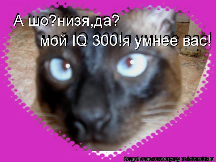 Котоматрица: А шо?низя,да? А шо?низя,да? мой IQ 300!я умнее вас! мой IQ 300!я умнее вас!