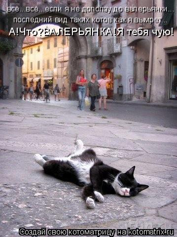 Котоматрица: всё...всё...если я не доползу до валерьянки... последний вид таких котов как я вымрет... А!Что?ВАЛЕРЬЯНКА!Я тебя чую!