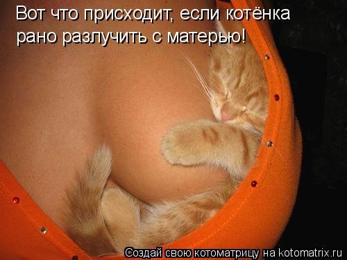 Котоматрица: Вот что присходит, если котёнка рано разлучить с матерью!