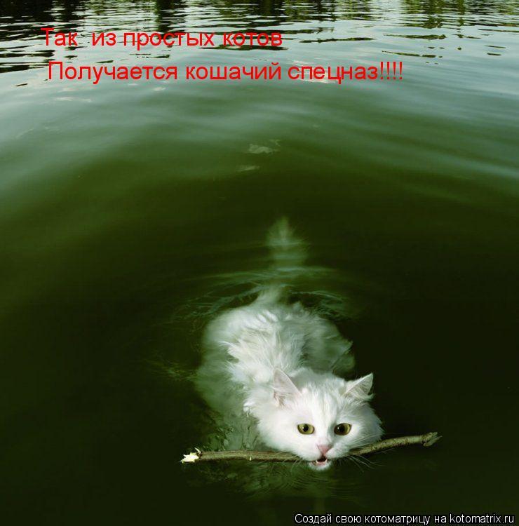 Котоматрица: Так  из простых котов  Получается кошачий спецназ!!!!