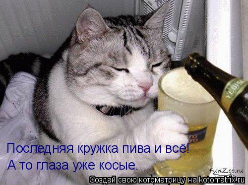 Котоматрица: Последняя кружка пива и всё! А то глаза уже косые.