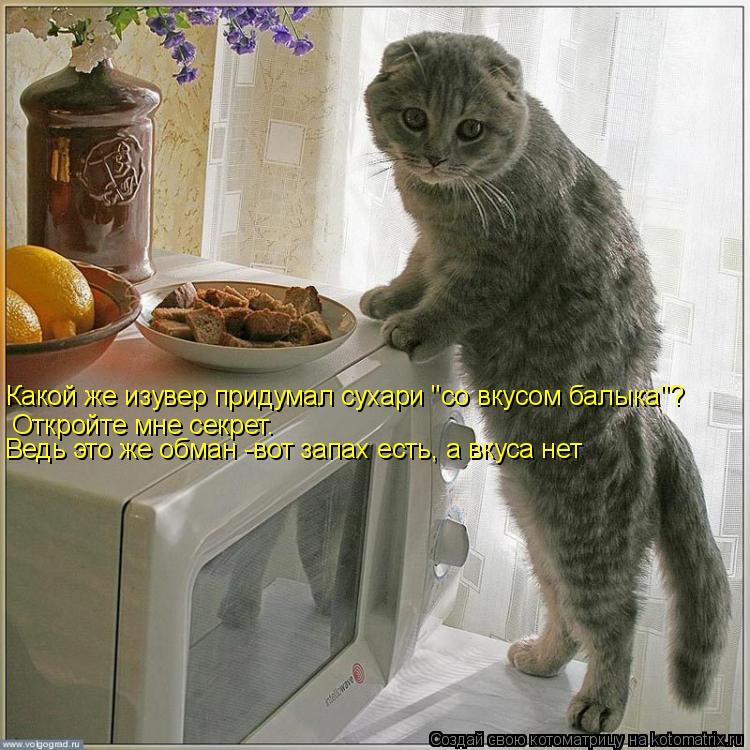 """Котоматрица: Откройте мне секрет. Ведь это же обман -вот запах есть, а вкуса нет Какой же изувер придумал сухари """"со вкусом балыка""""?"""
