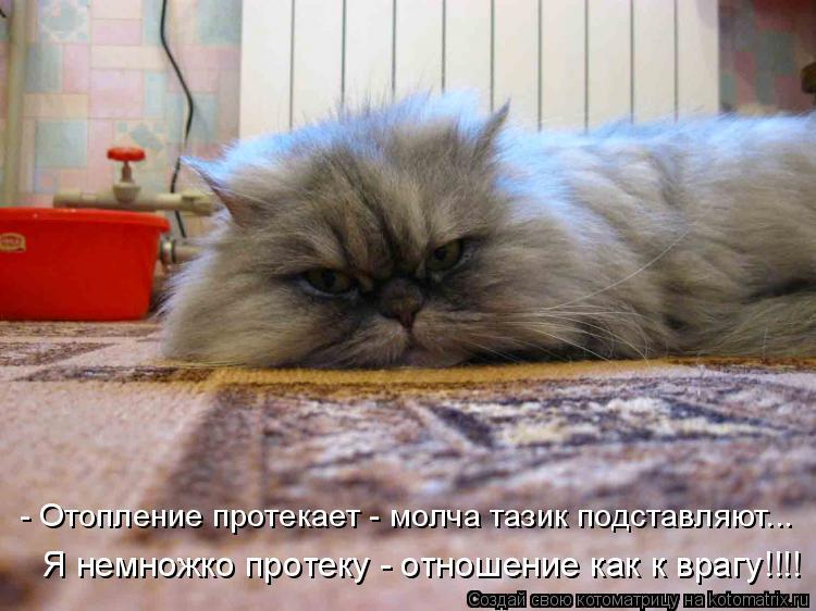 Котоматрица: - Отопление протекает - молча тазик подставляют... Я немножко протеку - отношение как к врагу!!!!