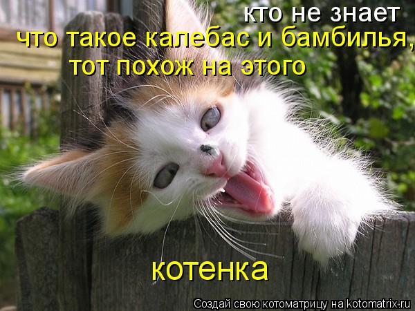 Котоматрица: кто не знает что такое калебас и бамбилья, тот похож на этого котенка