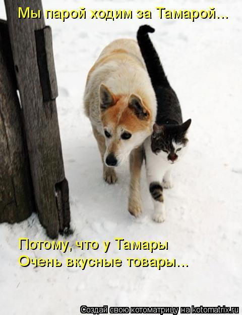 Котоматрица: Мы парой ходим за Тамарой... Потому, что у Тамары Очень вкусные товары...