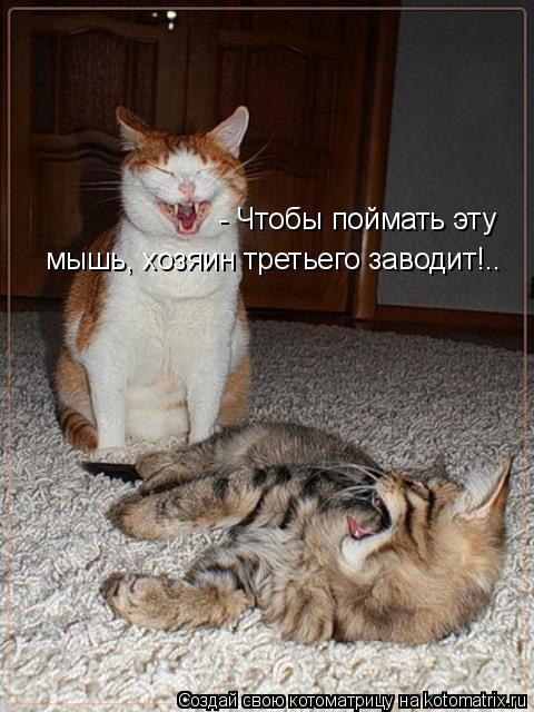 Котоматрица: - Чтобы поймать эту  мышь, хозяин третьего заводит!..