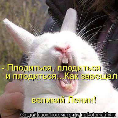 Котоматрица: - Плодиться, плодиться  и плодиться...Как завещал великий Ленин!