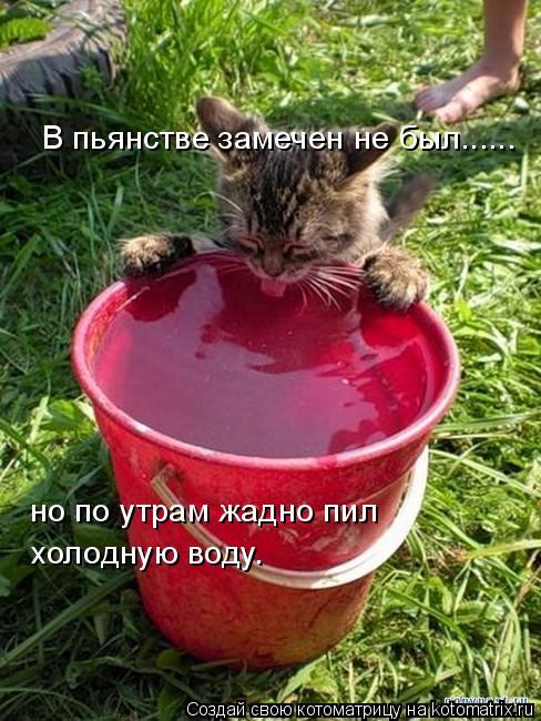 Котоматрица: В пьянстве замечен не был...... но по утрам жадно пил  холодную воду.