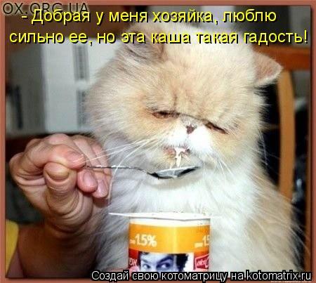Котоматрица: - Добрая у меня хозяйка, люблю  сильно ее, но эта каша такая гадость!
