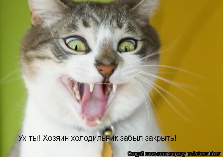 Котоматрица: Ух ты! Хозяин холодильник забыл закрыть!
