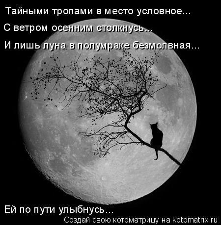 Котоматрица: Тайными тропами в место условное... С ветром осенним столкнусь... И лишь луна в полумраке безмолвная... Ей по пути улыбнусь...