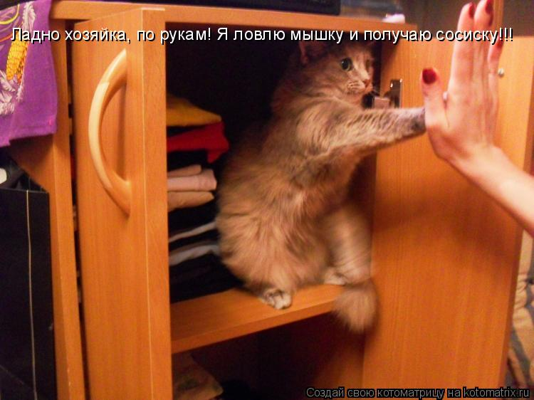 Котоматрица: Ладно хозяйка, по рукам! Я ловлю мышку и получаю сосиску!!!