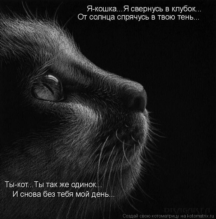 Котоматрица: Я-кошка...Я свернусь в клубок... От солнца спрячусь в твою тень... Ты-кот...Ты так же одинок... И снова без тебя мой день...