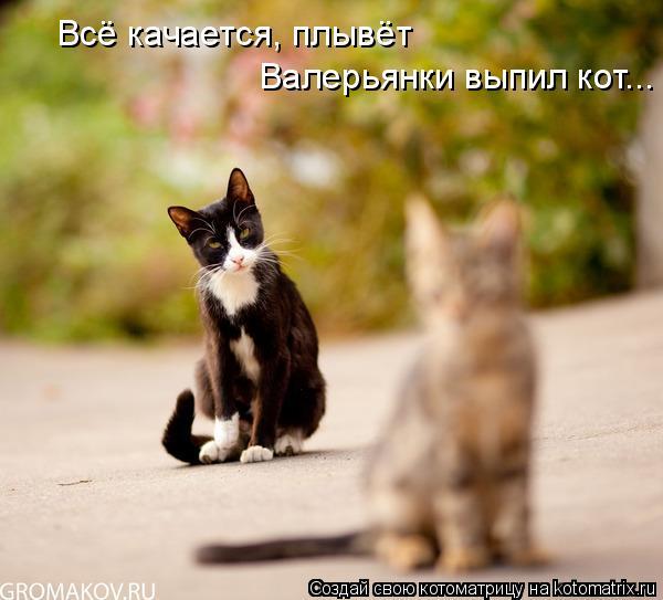 Котоматрица: Всё качается, плывёт Валерьянки выпил кот...