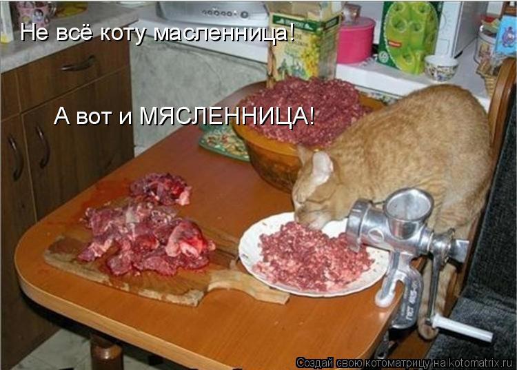Котоматрица: Не всё коту масленница! А вот и МЯСЛЕННИЦА!
