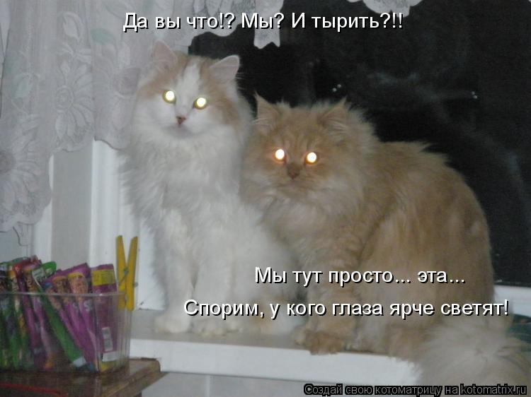 Котоматрица: Да вы что!? Мы? И тырить?!! Мы тут просто... эта... Спорим, у кого глаза ярче светят!