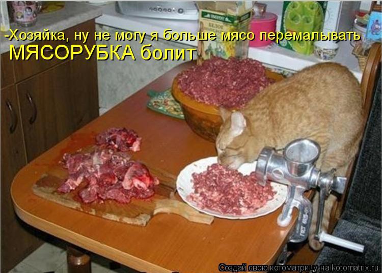 Котоматрица: -Хозяйка, ну не могу я больше мясо перемалывать МЯСОРУБКА болит