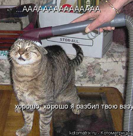 Котоматрица: ...ААААААААААААААА  хорошо  хорошо я разбил твою вазу