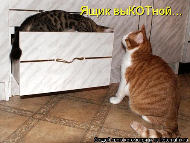 Котоматрица: Ящик выКОТной... Ящик выКОТной...