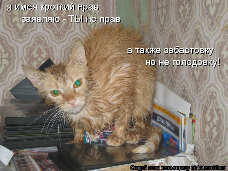 Котоматрица: я имея кроткий нрав заявляю - ТЫ не прав а также забастовку но не голодовку!
