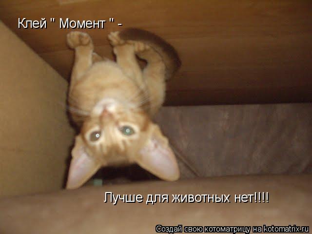"""Котоматрица: Клей """" Момент """" - Лучше для животных нет!!!!"""