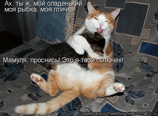 Котоматрица: Ах, ты ж, мой сладенький, моя рыбка, моя птичка! Мамуля, проснись! Это я-твой сыночек!