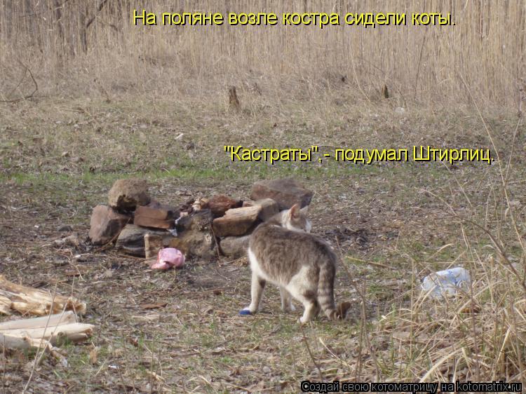 """Котоматрица: На поляне возле костра сидели коты.  """"Кастраты"""",- подумал Штирлиц."""
