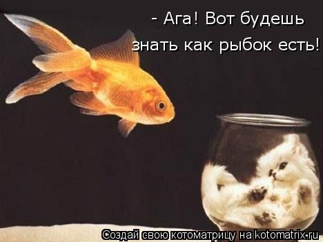 Котоматрица: - Ага! Вот будешь знать как рыбок есть!