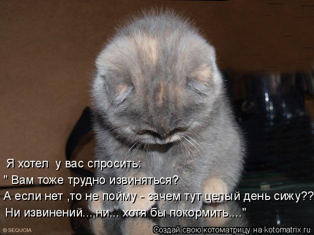 """Котоматрица: Я хотел  у вас спросить: """" Вам тоже трудно извиняться? А если нет ,то не пойму - зачем тут целый день сижу??? Ни извинений...,ни... хотя бы покормит"""