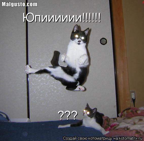 Котоматрица: Юпииииии!!!!!! ???