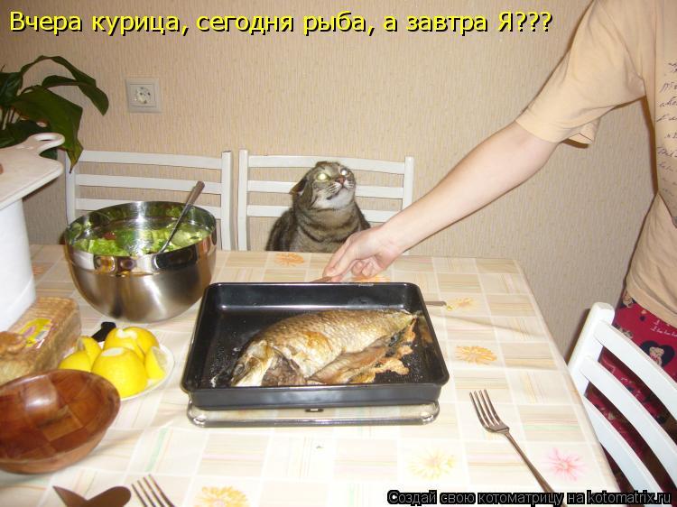 Котоматрица: Вчера курица, сегодня рыба, а завтра Я???