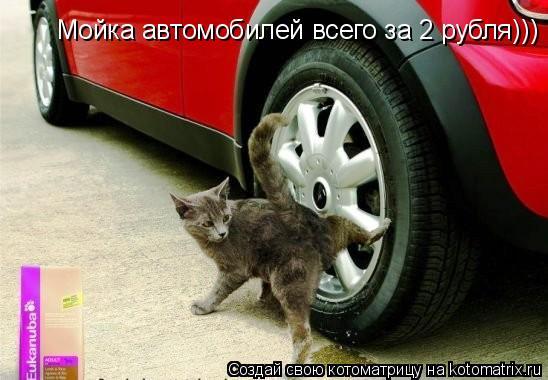 Котоматрица: Мойка автомобилей всего за 2 рубля)))