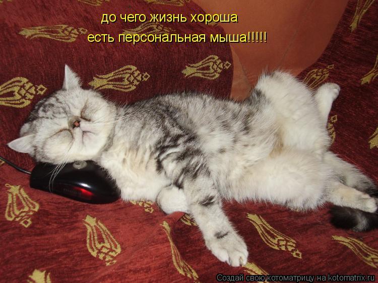 Котоматрица: до чего жизнь хороша есть персональная мыша!!!!!