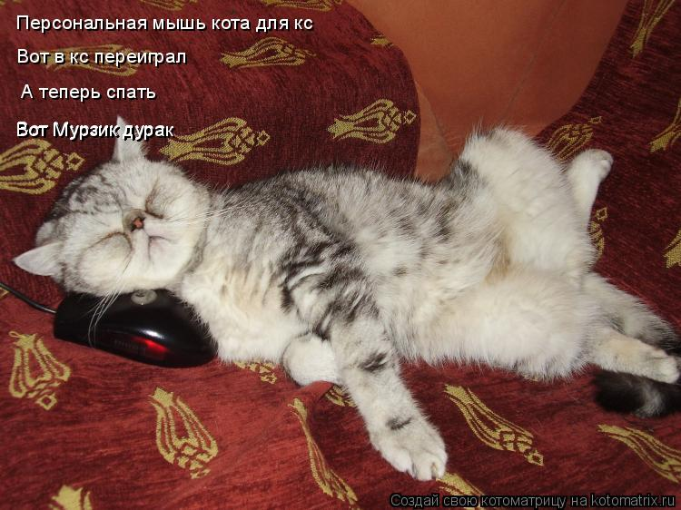 Котоматрица: Персональная мышь кота для кс  Вот в кс переиграл   А теперь спать  Вот Мурзик дура Вот Мурзик дурак