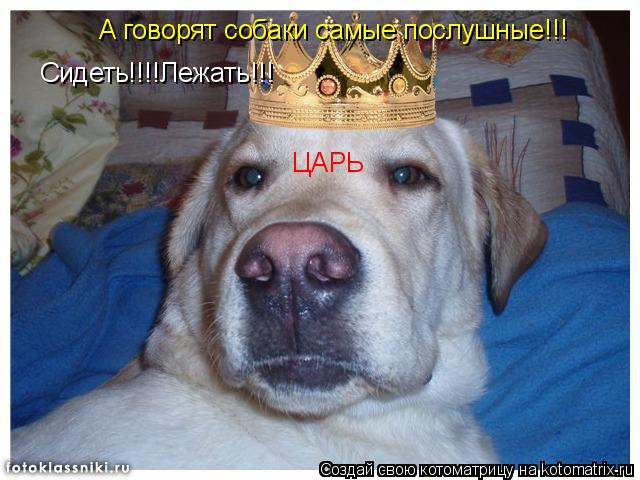 Котоматрица: ЦАРЬ Сидеть!!!!Лежать!!! А говорят собаки самые послушные!!!