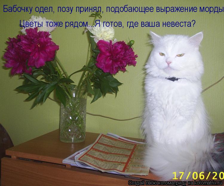 Котоматрица: Цветы тоже рядом...Я готов, где ваша невеста? Бабочку одел, позу принял, подобающее выражение морды.