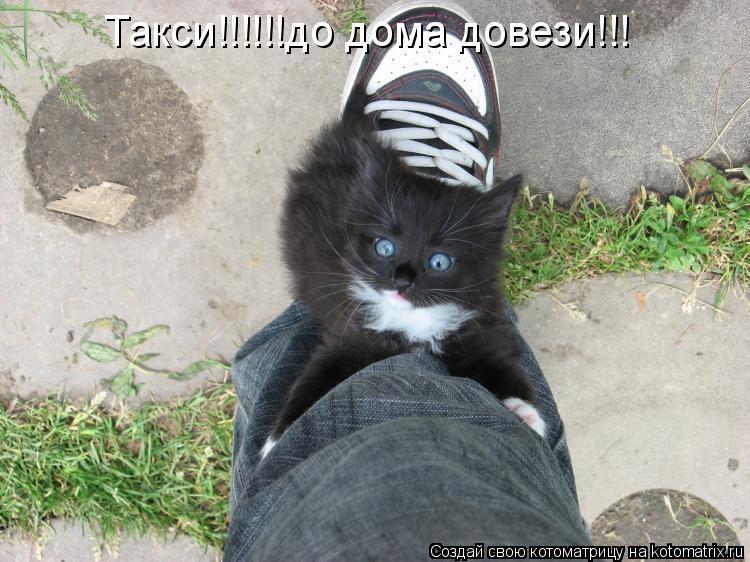Котоматрица: Такси!!!!!!до дома довези!!!