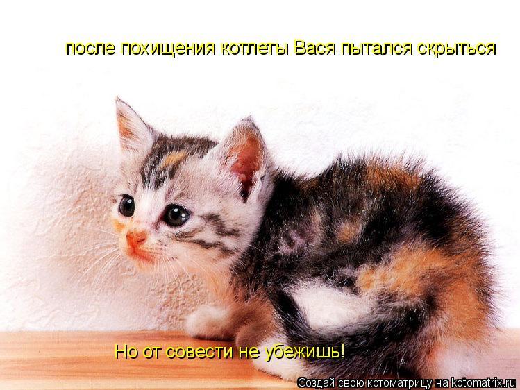 Котоматрица: после похищения котлеты Вася пытался скрыться Но от совести не убежишь!