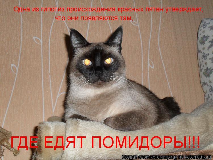 Котоматрица: Одна из гипотиз происхождения красных пятен утверждает, что они появляются там, ГДЕ ЕДЯТ ПОМИДОРЫ!!!