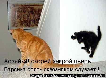 Котоматрица: Хозяйка! скорей закрой дверь! Барсика опять сквозняком сдувает!!!